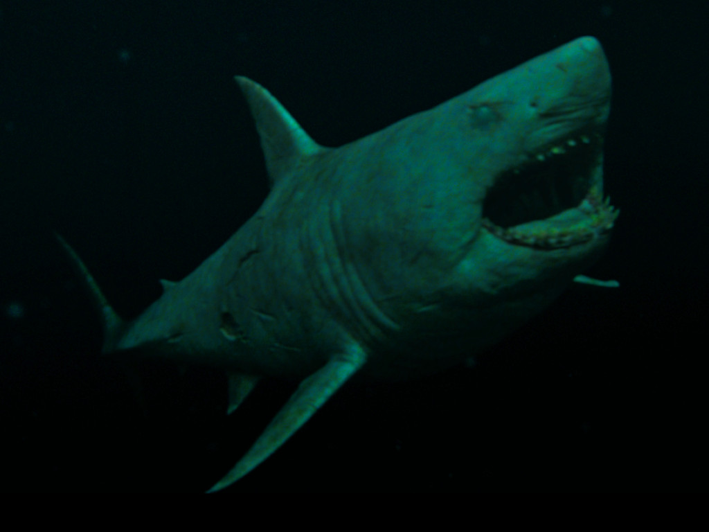 """""""47 Meters Down: Uncaged"""" unleashes more deadly sharks"""